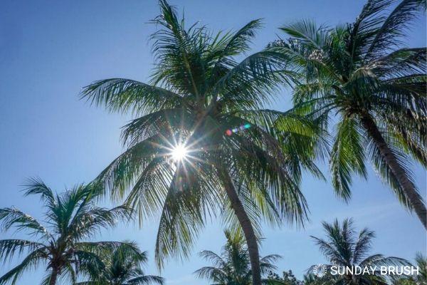 Blogfoto Sunday Brush Het verschil tussen UVA en UVB straling